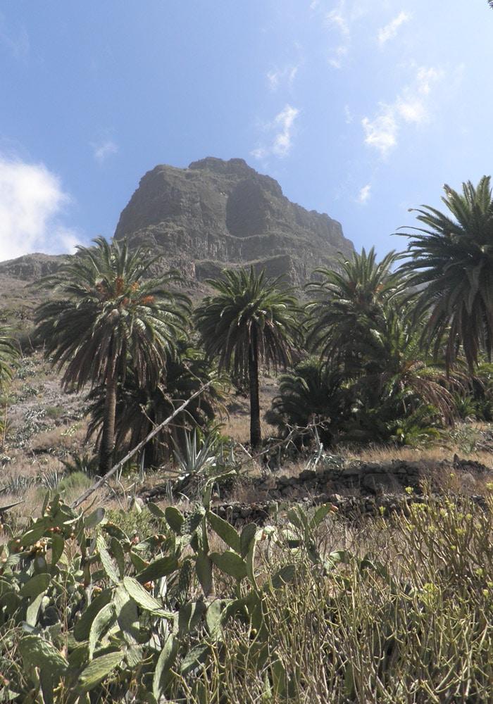 Palmeras y chumberas en el inicio de la ruta del barranco de Masca