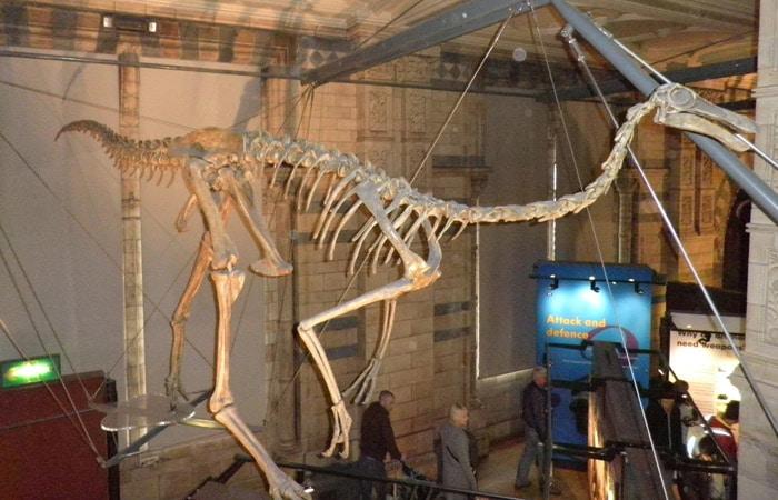 Esqueleto de un dinosaurio en el Museo de Historia Natural Londres