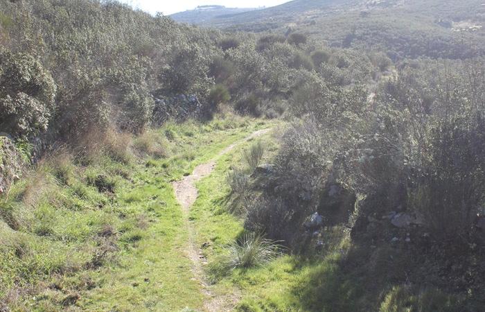 Sendero de la etapa 31 de la Senda del Duero entre Pinilla de Fermoselle y Fermoselle