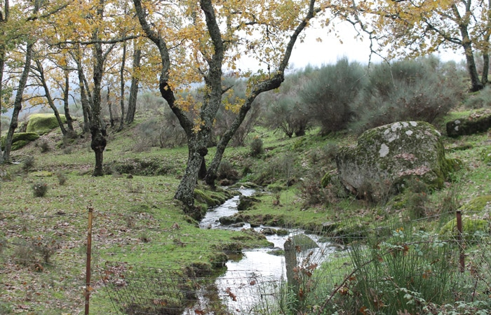 Pequeño arroyo junto al camping El Burro Banco Camino de los Rodales