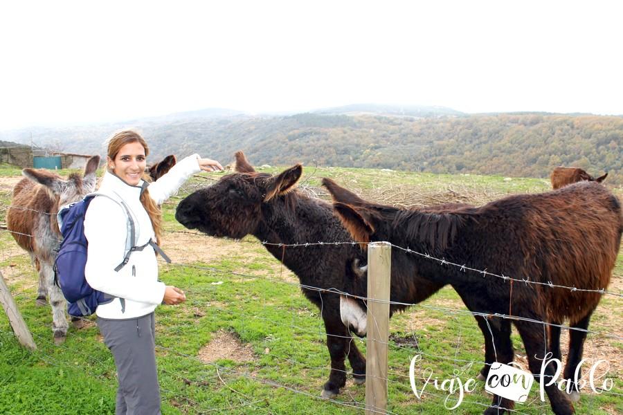 Junto a unos simpáticos burros a la llegada a Miranda del Castañar