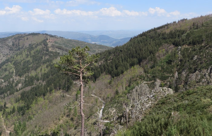 Vegetación en la Ribeira de Leandres ruta del Jabalí