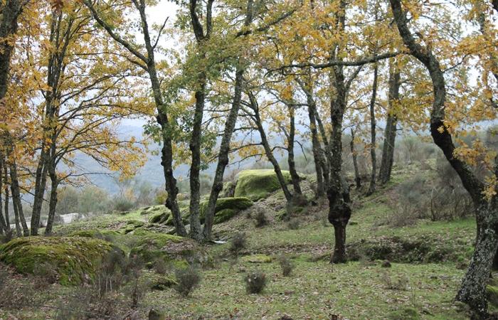 Vegetación en el entorno del sendero del Camino de los Rodales