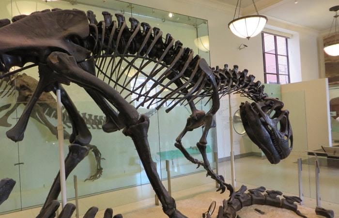 Esqueleto de dinosaurio en el Museo Americano de Historia Natural