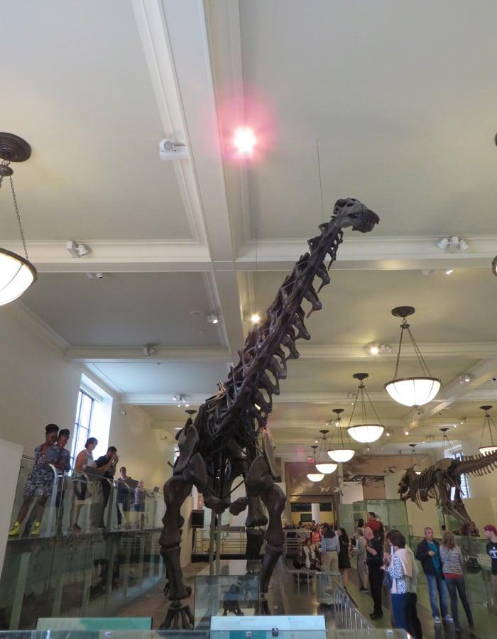 Otro esqueleto de dinosaurio en el Museo Americano de Historia Natural