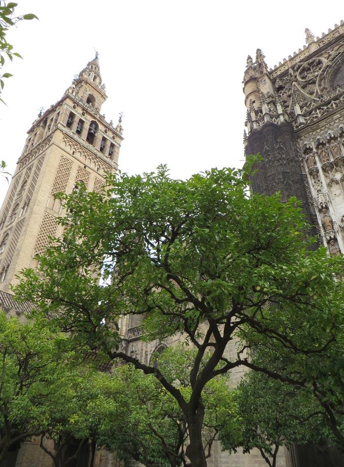 Patio de los Naranjos de la Catedral monumentos de Sevilla