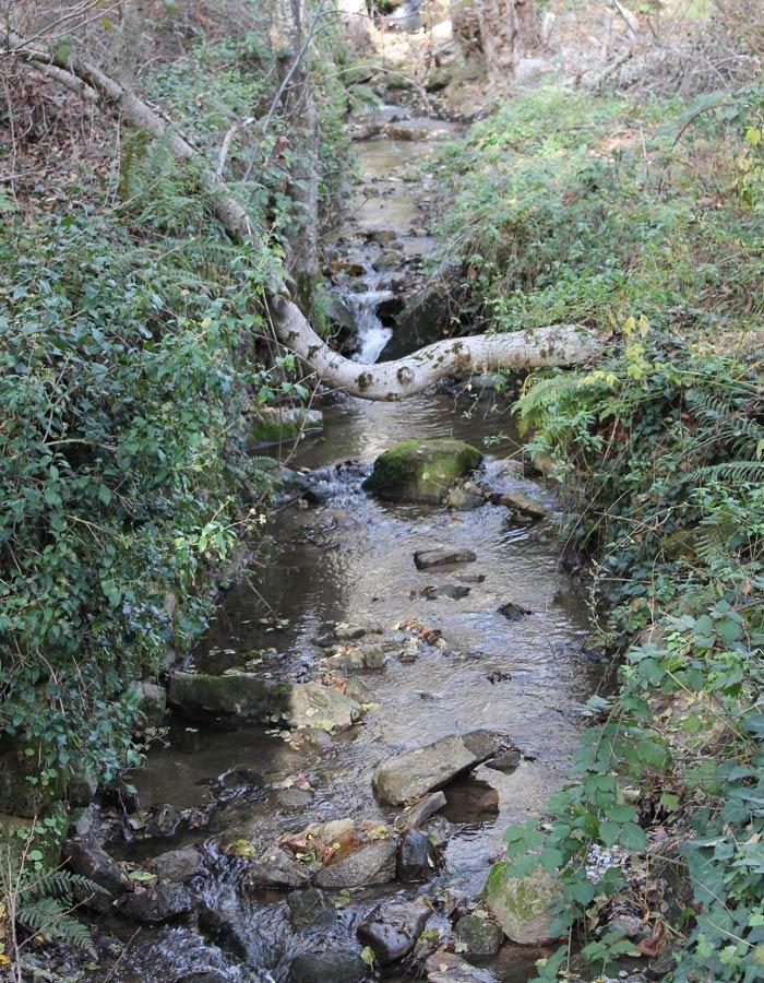 Arroyo de Buena Madre Bosque de los Espejos