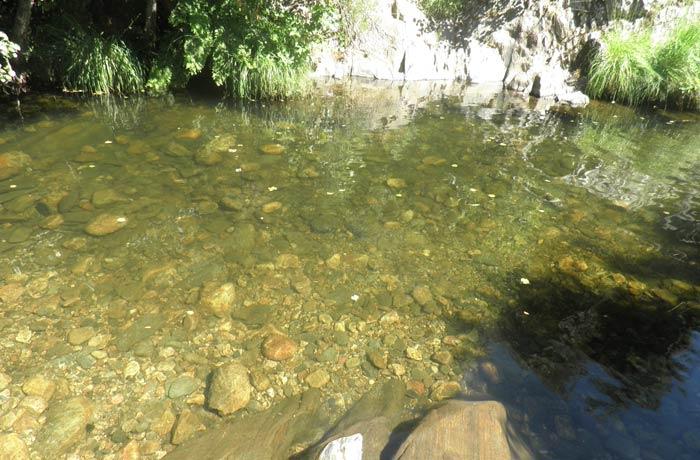 Cristalinas aguas del río Ladrillar en la piscina natural de Las Mestas