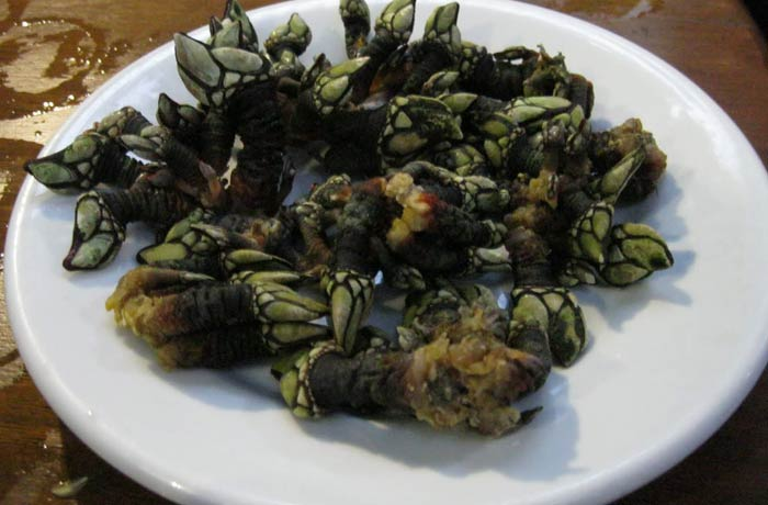 Percebes de la sidrería El Bodegón de Llanes comer en Asturias