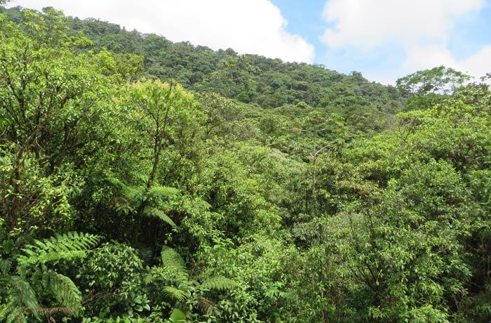 Vegetación al inicio del sendero Río Celeste