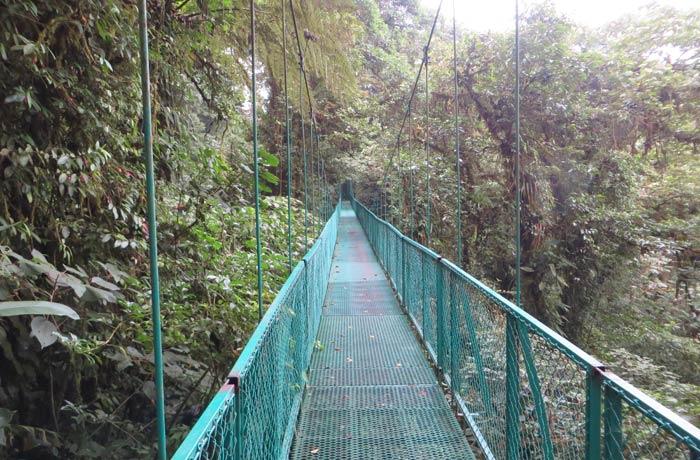 Uno de los puentes colgantes de la ruta qué hacer en Monteverde