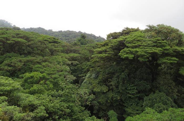 Vegetación del bosque nuboso de Santa Elena qué hacer en Monteverde