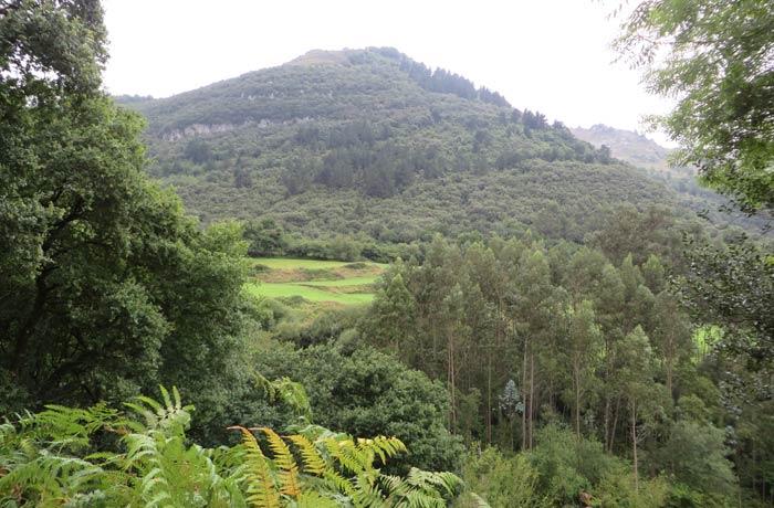 Abundante vegetación en los primeros compases de la subida a la Bien Aparecida