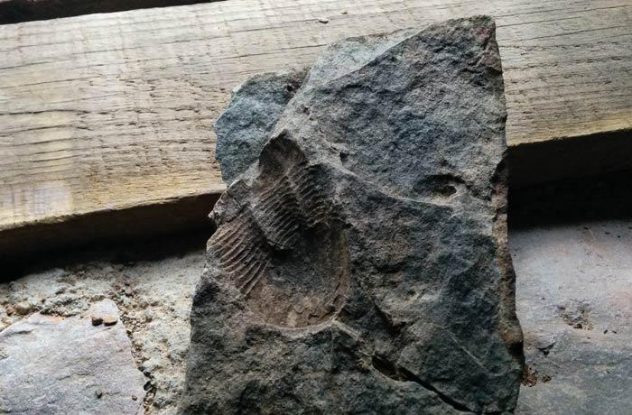 Uno de los fósiles que se puede ver Penha Garcia