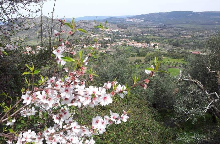 Almendro en flor y entorno de Monsanto Portugal