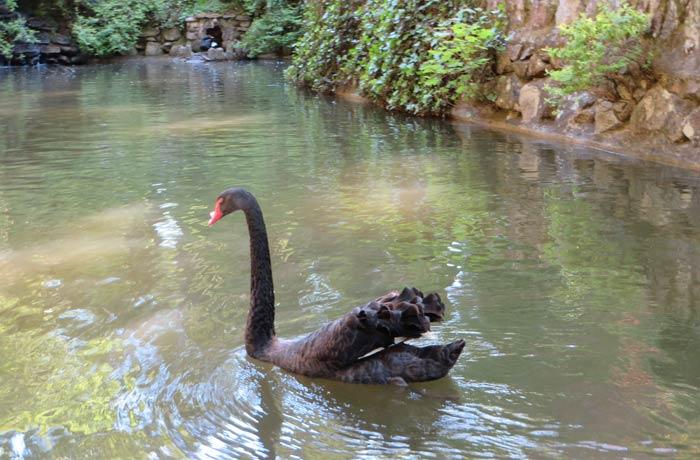 Cisne en el Portao dos Lagos qué ver en Sintra