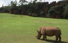 zoo de cabárceno