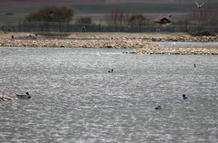 Aves en una de las lagunas artificiales de la Casa del Parque mejor época para visitar las Lagunas de Villafáfila