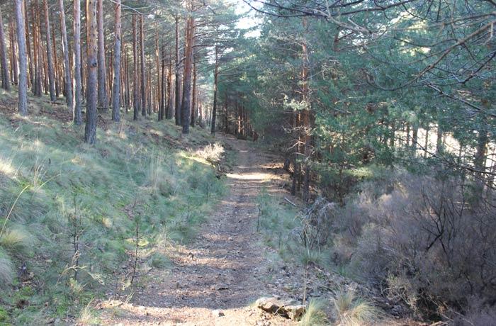 Sendero de regreso tras dejar la pista forestal y cruzar unos metros campo a través
