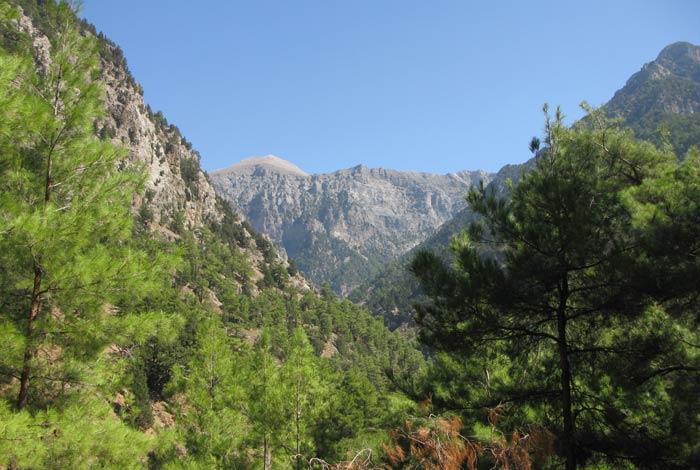 vegetación Garganta de Samaria