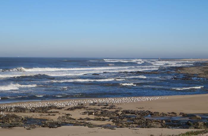 Vista del Atlántico y bandada de gaviotas