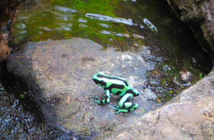 Una de las ranas del ranario