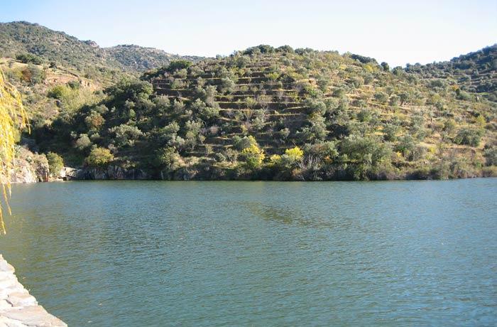 Bancales con olivos junto al Duero Sendero de la Barca