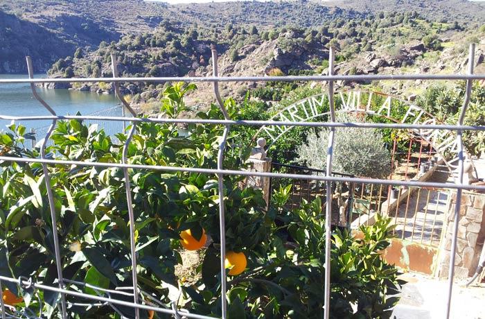 Naranjos junto al paraje de La Barca