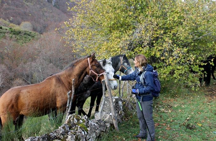 Estefanía con un grupo de caballos ruta Lago del Valle