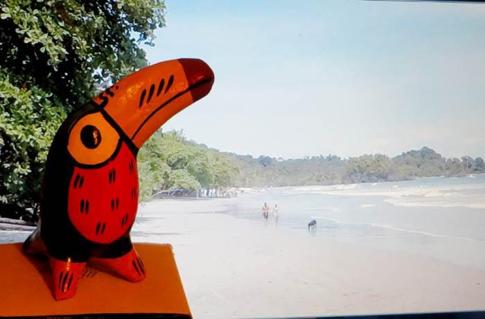 Tucán que silba con la playa de Espadilla de Costa Rica de fondo souvenirs del mundo