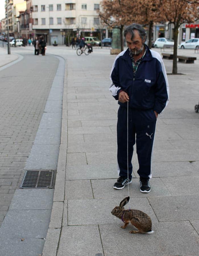 Un hombre paseando por Astorga a una peculiar mascota, una liebre