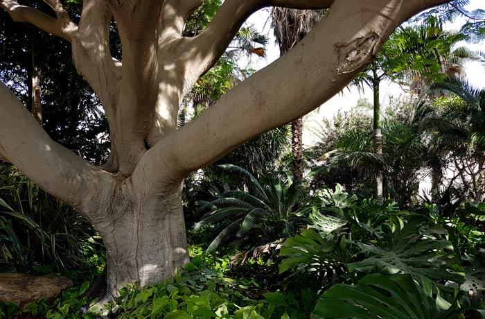Vegetación del jardín botánico de Ein Gedi mar Muerto en Israel