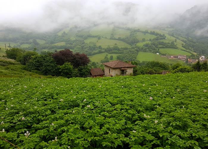 Espectacular paisaje verde en el entorno de Pedroveya ruta de las Xanas