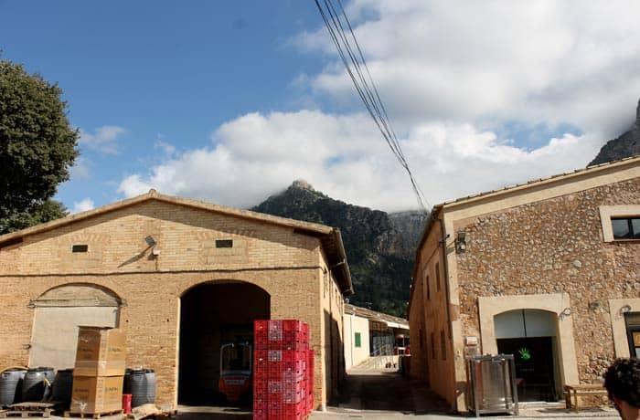 Cooperativa Sant Bartomeu con la Tramontana al fondo qué hacer en Mallorca en invierno