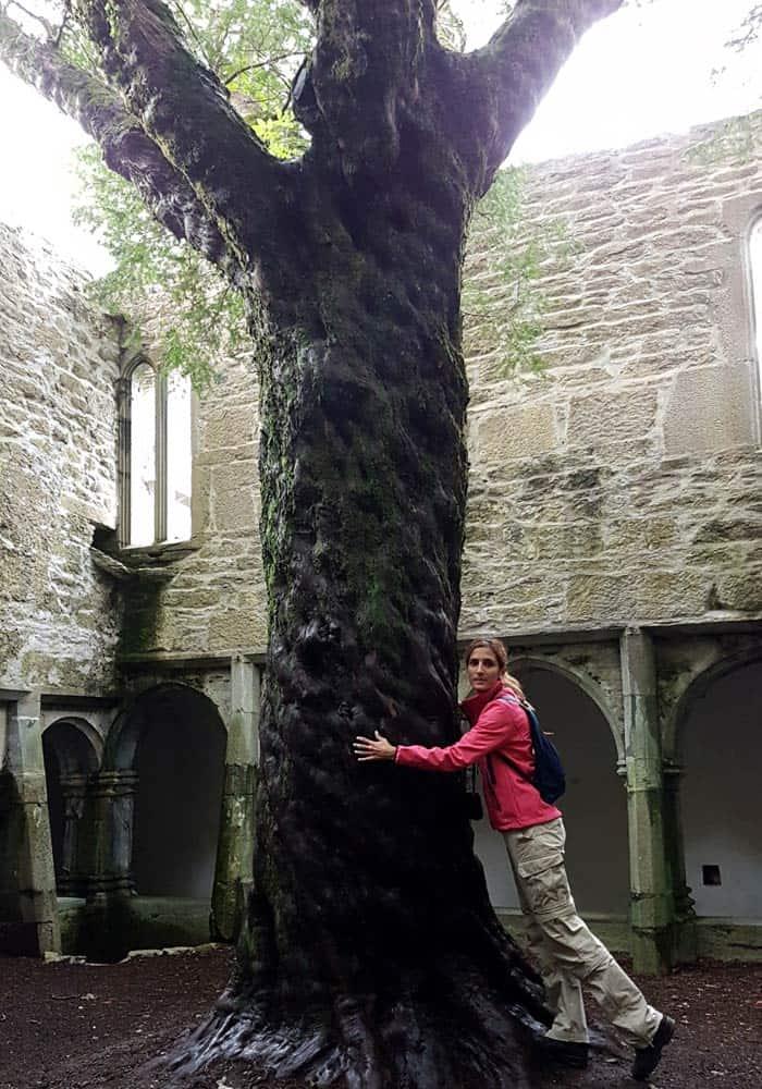 Tejo en el claustro de la abadía de Muckross Anillo de Kerry