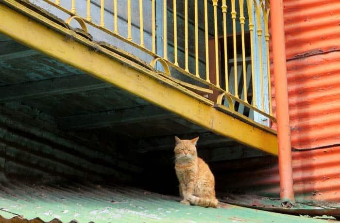 Un gato en una de las casas de Caminito visitar La Boca