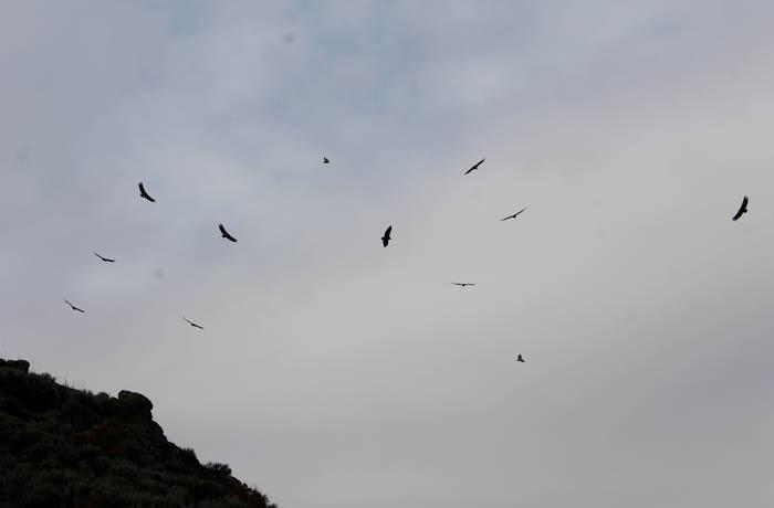Buitres en el entorno del Pozo Airón