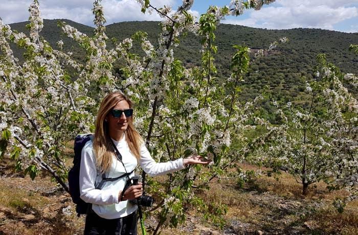 Cerezos en la ruta de los Tres Ríos