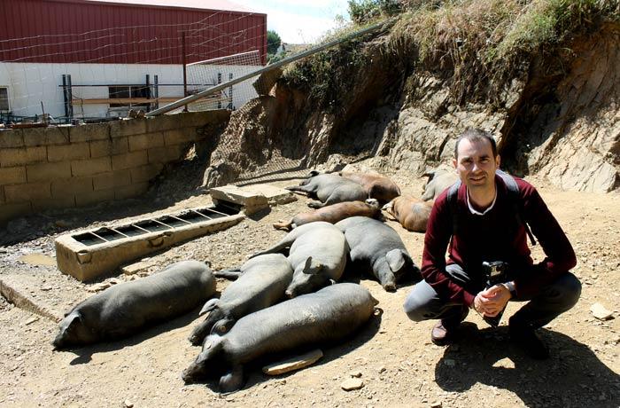 Con los cerdos de Eíriz qué hacer en Aracena