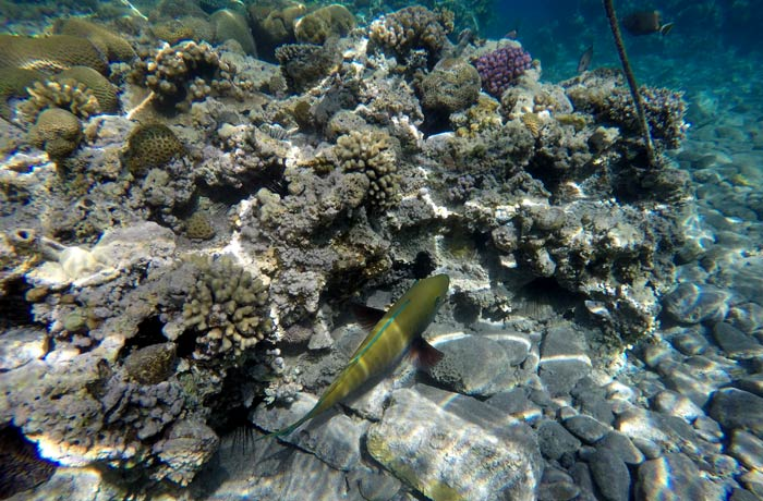 Uno de los peces multicolores que contemplamos haciendo esnórquel en el mar Rojo qué hacer en Eilat