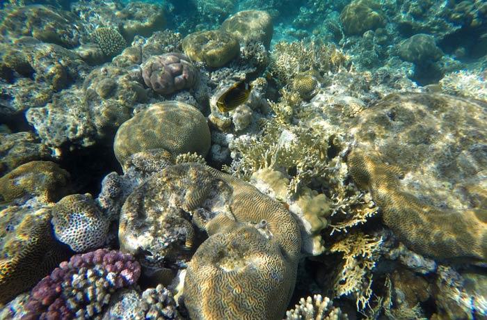 Rico fondo marino del mar Rojo en Eilat