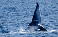 Ver ballenas en Azores