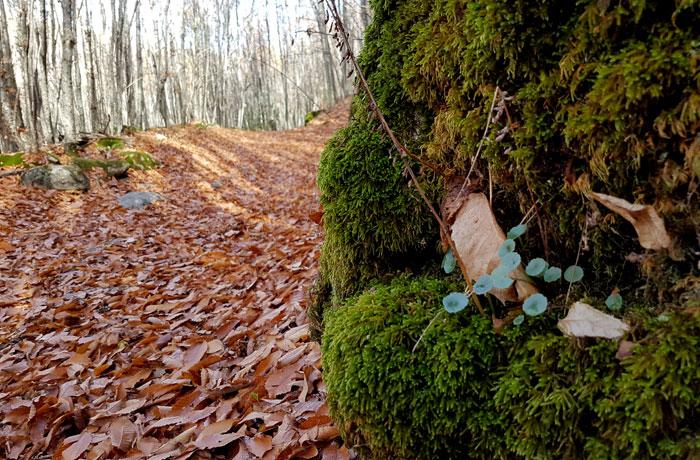 Musgo junto al manto de hojas