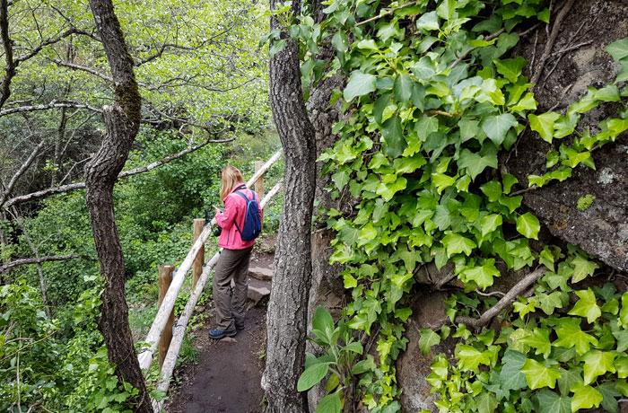 Abundante vegetación durante la ruta junto a las cascadas