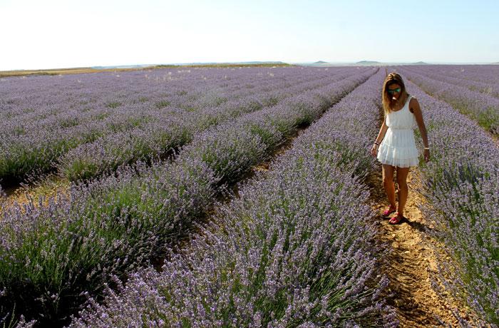 Estefanía, en uno de los campos de lavanda en flor