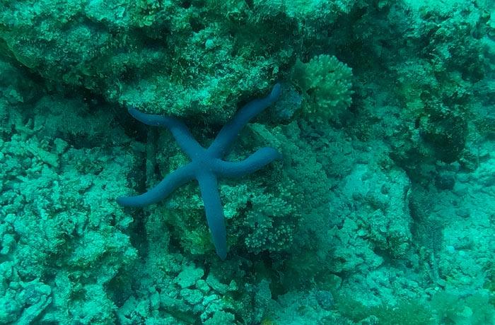 Estrella de mar buceo en Zanzíbar