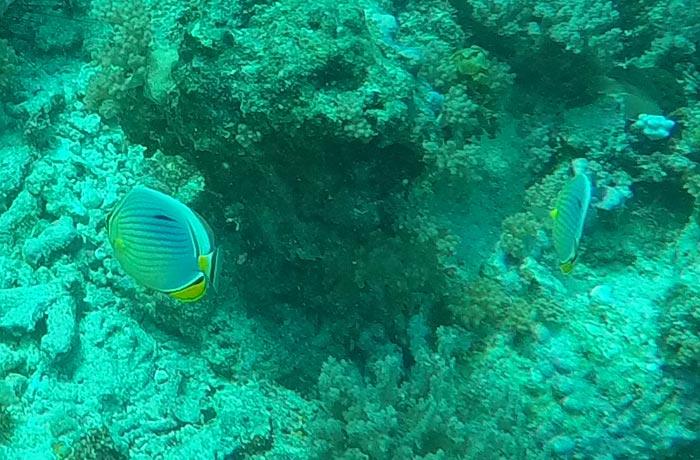 El fondo coralino del atolón de Mnemba buceo en Zanzíbar