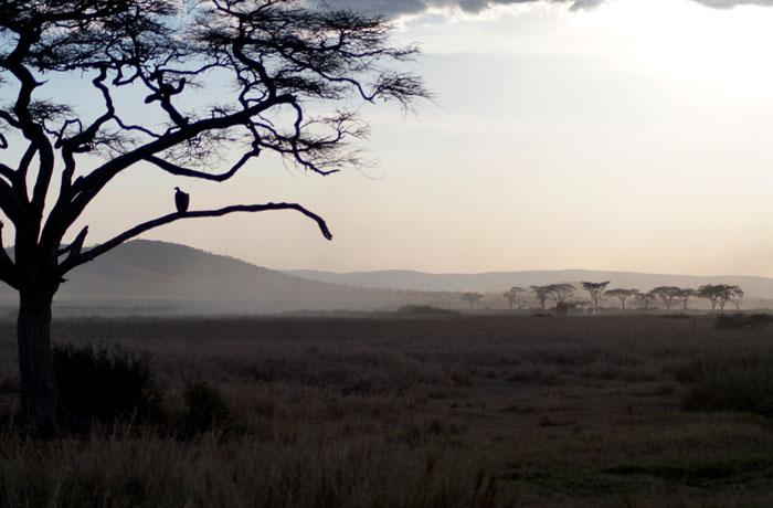Imagen característica de la llanura del Serengeti