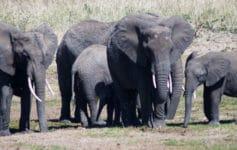 Consejos safari en Tanzania