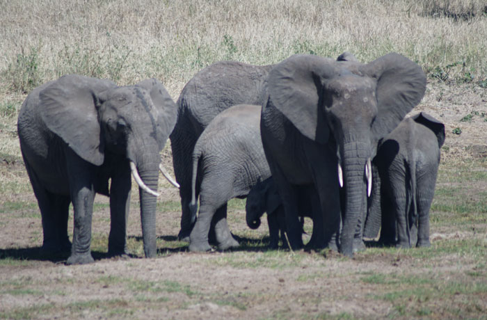 Elefantes en Tarangire consejos safari en Tanzania